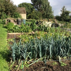 Allotment News Header photo